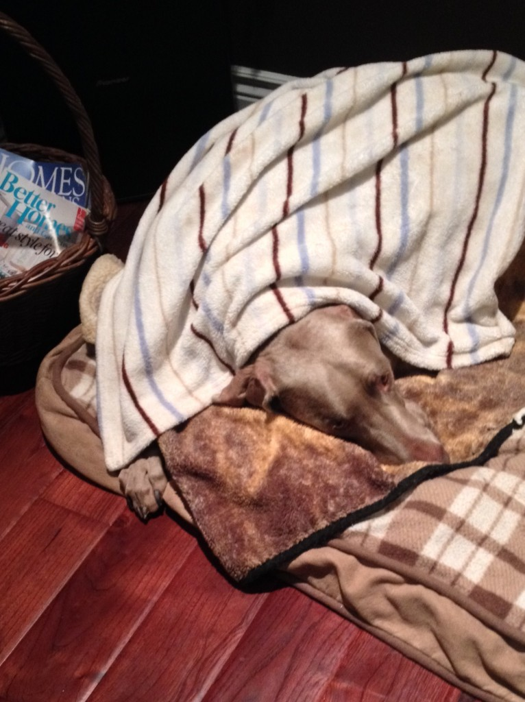Sterling and his blanket 003