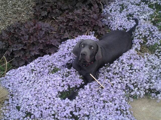 jase-in-the-flowers