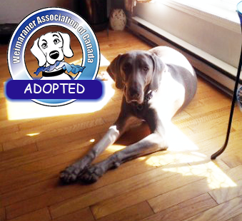 Jessy-Adopted